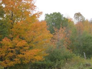Web-fall trees