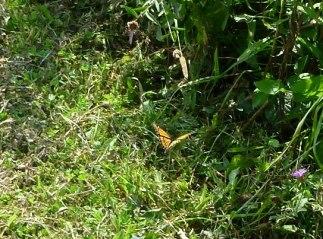 4-076, Butterfly 3